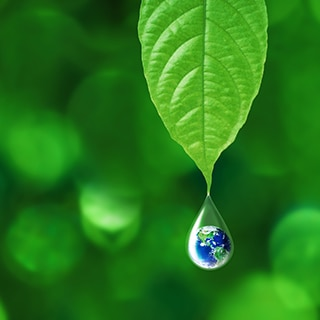 Healthy green leaf with droplet of water suspending from the tip of the leaf.